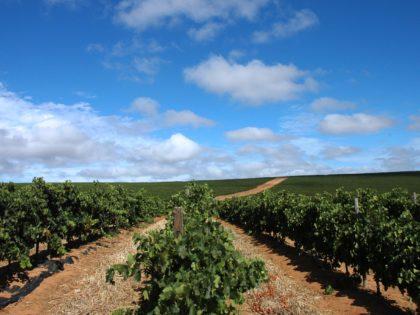Diversity of Darling Vineyards